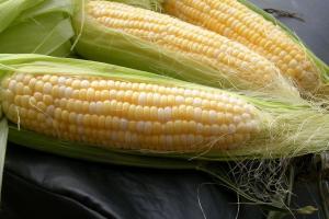 Южна Корея ще внася украинска фуражна царевица