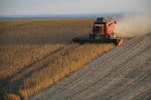 Сухо време и ускорена жътва потискат царевица и соя в Чикаго