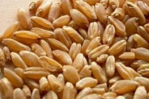 Иран може да внася до 3Ммт пшеница