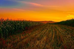 Фермерите в Бразилия продават бързо соята и царевицата си
