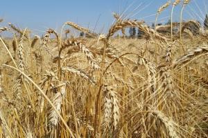 Йордания договаря внос на 60кмт хлебна пшеница