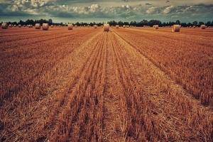 Рекордно малки площи с пшеница в САЩ