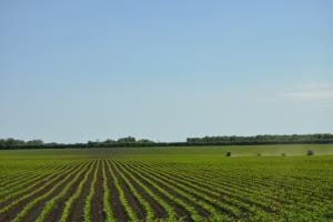 Пшеницата в Аржентина продължава да се влошава