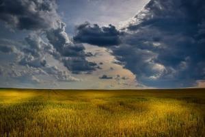 Пазарът на пшеница в Чикаго прибира печалби и цените отслабват