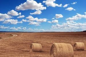 Алжир договаря внос на поне 500кмт хлебна пшеница