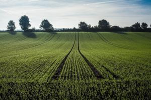 По-малко площи с пшеница в Германия подкрепя цените на MATIF