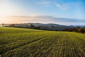 Площите с пшеница под жътва във Франция спадат с 5.6%