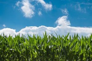 Южна Корея договаря внос на фуражна царевица за юли/август