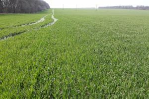 Снимки от обследване на зърнените посеви в Североизточна България – март 2020