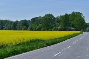 Strategie Grains намалява прогнозата си за производство на маслодайни в ЕС