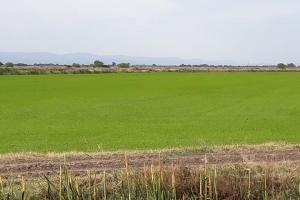 Износът на пшеница от ЕС се покачва, вътрешното потребление спада