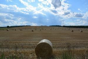 Първоначалните добиви от пшеница и ечемик в България са плачевни