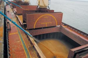 Египет закупи на търг 115 кмт пшеница с украински произход