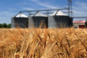 Корекция на продукцията на пшеница и ечемик за 2020/21 от Европейската комисия