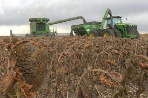 Жътвата на слънчогледа в България стартира със слаби добиви
