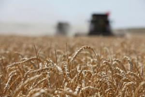 Египет закупи на търг 530 кмт руска пшеница