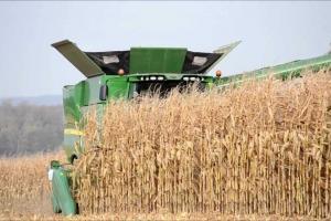 Добивите на слънчогледа и царевицата в България остават слаби
