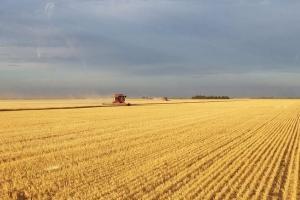 Алжир организира търг на пшеница при занижени изисквания