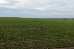 Сеитбата на пшеницата в България изостава с 57% спрямо 2019