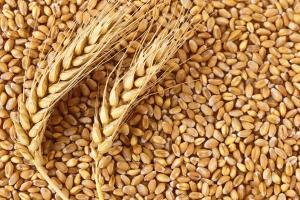 Пакистан продължава с активен внос на хлебна пшеница