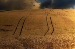 Индонезия оставя ключов пазар за украинската пшеница