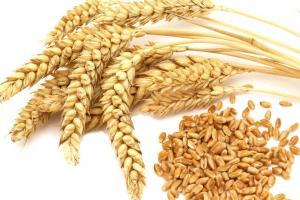 Ценови спад на пшеницата предизвиква интереса на вносители