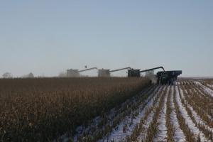 Унгария отчита рекордни средни добиви от царевица