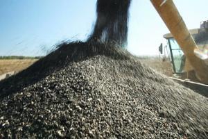 USDA София понижава реколтата от слънчоглед в България