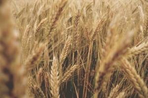 Йордания отново ще търси хлебна пшеница