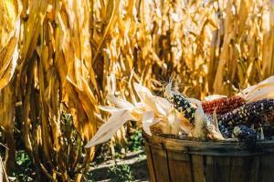 Цените на пшеницата в Украйна преминават 6-годишен връх на база FOB