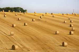 Турция се отказва от 10-те най-скъпи предложения на търга за пшеница