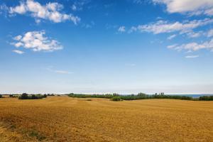 Зърнените пазари в Европа се възползват от слабо евро