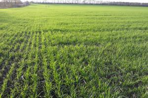 В Южна Русия са поникнали едва 50% от зимните посеви