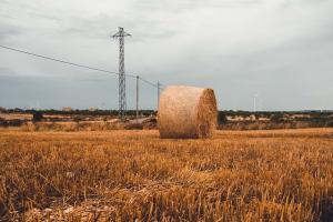 Експортните цени на руската пшеница се понижават за втора поредна седмица