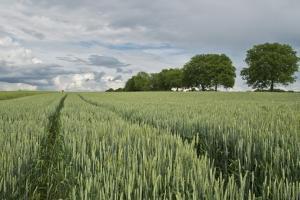 Йордания продължава с активни покупки на пшеница