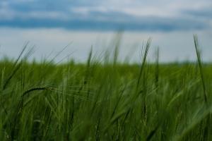 Ценово покачване на пшеница MATIF, подкрепено от студеното време в САЩ