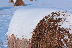 Състоянието на зимната пшеница в САЩ се влошава