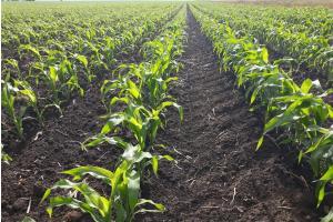 Новите реколти соя и царевица в Чикаго катерят нови върхове
