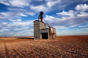 Смесени резултати при зърнени и маслодайни в Чикаго и Париж