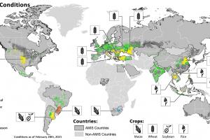 AMIS прогнозират нов рекорд в производството на пшеница през 2021