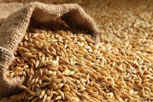 Иран купува по-малко от планираното фуражен ечемик