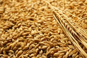 Йордания търси внос на фуражен ечемик за октомври 2021