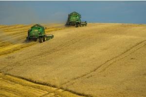 MARS прогнозират по-добри добиви на пшеница, ечемик и рапица в ЕС