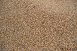 Тайван ще търси внос на фуражна царевица за юни 2021
