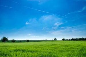 Състоянието на зимната пшеница в САЩ се подобрява
