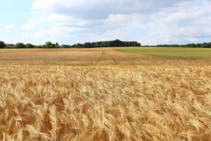Зърнените борси в Париж и Чикаго почиват заради Великден
