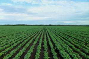 Сухото време в повечето райони в Бразилия, подпомага жътвата на царевица и соя