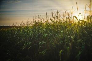 Новата реколта пшеница в САЩ бележи скок в експортните продажби