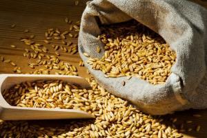 Южна Корея търси внос на до 70кмт фуражна пшеница