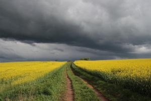 Румъния изнася пшеница във Франция, а Украйна рапица в Канада
